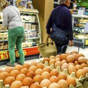 Œufs contaminés au Fipronil: un chef d'entreprise belge condamné à un an de prison ferme