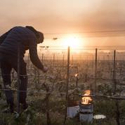 Une nouvelle aide d'urgence pour les agriculteurs victimes de la vague de gel d'avril