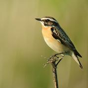 Le déclin des populations d'oiseaux en France se poursuit