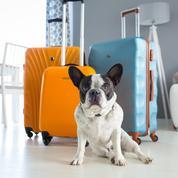 Vous partez avec votre chien ou votre chat ? Cet outil vous aide à choisir un lieu de vacances adapté