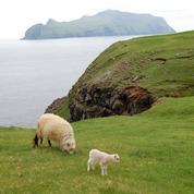 Gardien d'une clôture à mouton : l'offre insolite à pourvoir sur une petite île d'Écosse