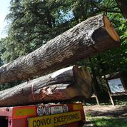 300 ans et 15 tonnes chacun : les premiers chênes de la charpente de Notre-Dame sont en route pour la scierie