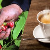 De la plantation à la tasse au comptoir, le vrai prix du café