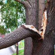 Orage : comment réparer un arbre abîmé ?