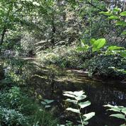 Côte d'Or : une enquête ouverte après la découverte de deux caisses de professions de foi dans une forêt