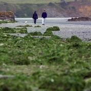 La Cour des comptes dénonce l'impuissance des pouvoirs publics face aux algues vertes en Bretagne
