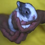 Cantal : 156 animaux sauvés du domicile d'un particulier par un refuge