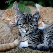Vacances : cri d'alerte de la SPA sur les abandons d'animaux