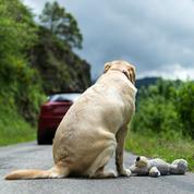 Abandonner son animal : que dit la loi ?