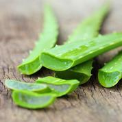 Des plantes pour une peau saine