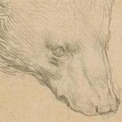 Un dessin signé Léonard de Vinci de la taille d'un post-it vendu plus de 10 millions d'euros