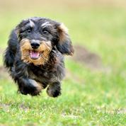 Découvrez 10 races de chiens pour vivre en appartement