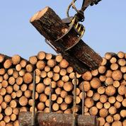 «Évitons le sacrifice de notre filière bois!»
