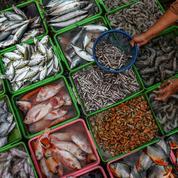 OMC/Pêche: les ingrédients sont réunis pour arriver «à une conclusion couronnée de succès»