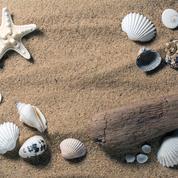 Galets, sable, coquillages... Quel souvenir a-t-on réellement le droit de rapporter de la plage ?