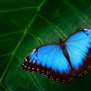 La Société américaine d'entomologie annonce changer le nom de certains insectes jugés «insultants» ou «racistes»