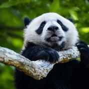 «On est épuisé»: le directeur du ZooParc de Beauval a saisi le Conseil d'État sur le passe sanitaire