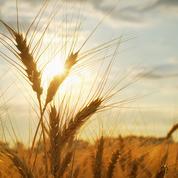 Les céréales rebondissent sur fond de craintes climatiques aux Etats-Unis et en Europe
