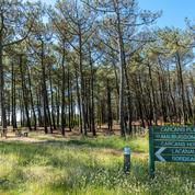 L'UE veut durcir la protection des forêts, la filière bois vent debout