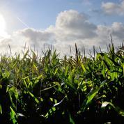 Les cours des céréales soutenus par la météo