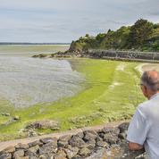 Algues vertes : après son rapport, la Cour des Comptes en visite de courtoisie en Bretagne