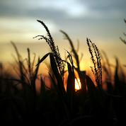 Le blé se replie avec l'avancée de la moisson