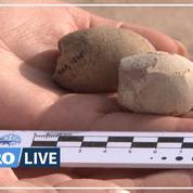 Découverte de 160 œufs d'oiseaux préhistoriques en Argentine