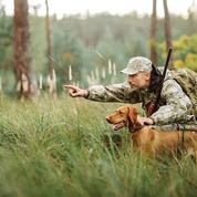 Découvrez 5 races de chiens de chasse