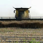 Le blé commence la semaine en baisse