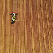 Le blé repart à la hausse, la pluie joue les trouble-fêtes