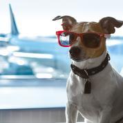 Vous prenez l'avion avec votre animal de compagnie ? Dix choses à savoir