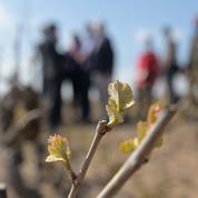Vin : après un début d'année éprouvant, les viticulteurs français prévoient des hausses de prix