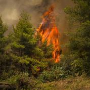 Incendies en Grèce : la colère gronde à Asimnio, où «personne n'arrive»