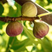 Septembre : quels sont les légumes et les fruits de saison ?