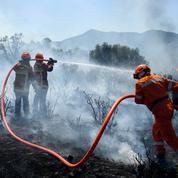Incendies : une forêt brûlée peut-elle se reconstituer ?