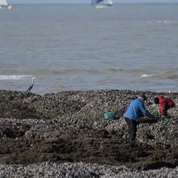 Loire-Atlantique : la pêche à pied interdite après la découverte d'une microalgue