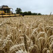 Pénurie de blé: la FNSEA invite à «relativiser» la hausse du prix des pâtes