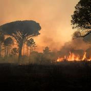 Incendies dans le Var : au cœur de la cellule d'investigation