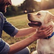 Journée mondiale du chien : 3 chiens qui ont fait l'histoire