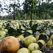 Gel d'avril: des pommes mais pas de poires dans les vergers
