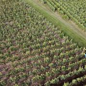 Champagne : la bataille des professionnels contre les contrefaçons et le parasitisme