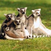 Drôme : deux individus mis en examen pour avoir enlevé plusieurs animaux dans un zoo