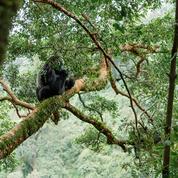 Yann Wehrling : «Protéger la nature devient une question de survie de l'humanité»