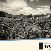 Pour certains vins, le climat polonais est d'ores et déjà plus adapté que celui des régions françaises traditionnelles