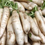 Le daïkon : comment cultiver ce légume méconnu ?