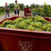 Champagne : les ventes de Lanson et Vranken-Pommery ont rebondi au premier semestre