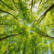 Comment la nature fait du bien à notre moral