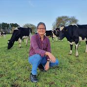 Des vaches dressées pour aller au petit coin et ainsi réduire les gaz à effet de serre