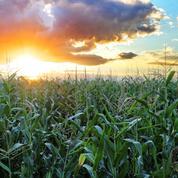 Chicago: le maïs porté par des inquiétudes sur les rendements américains