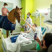 Soulager les malades grâce aux animaux, la zoothérapie en photos